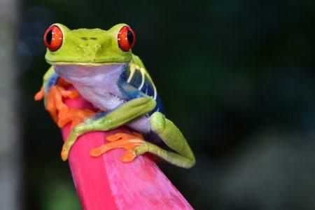 Costa Rica, une nature exceptionnelle
