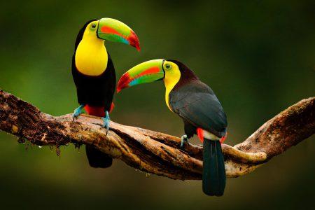 Découvrez notre randonnée Costa Rica